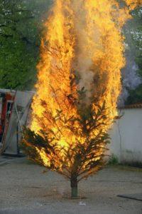 Das Bild zeigt einen brennenden Weihnachtsbaum.
